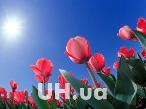 Какие цветы к 8 марта заказали киевляне через интернет
